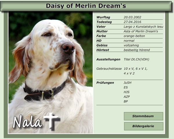 Daisy of Merlin Dream's