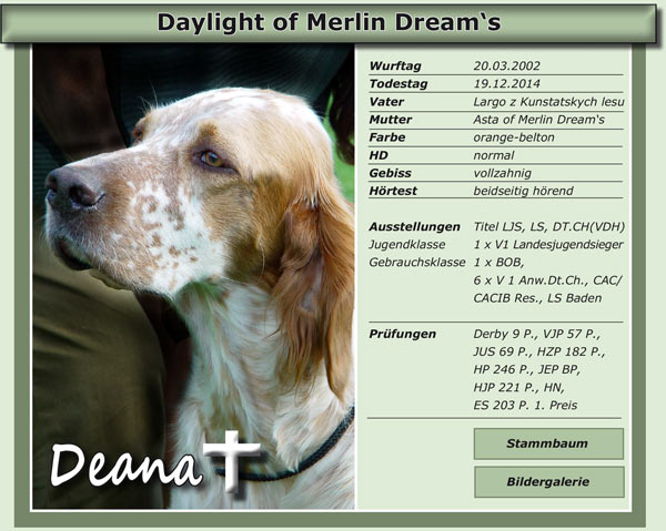 Daylight of Merlin Dream's