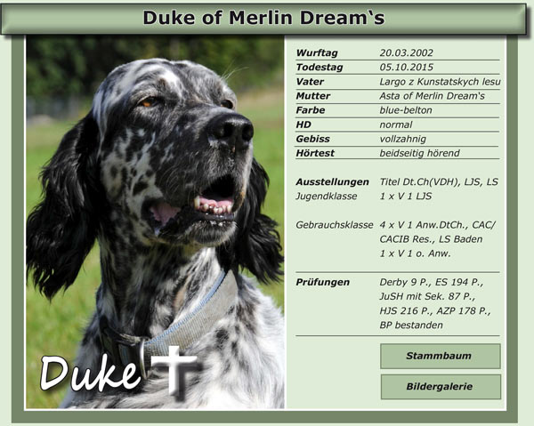 Duke of Merlin Dream's