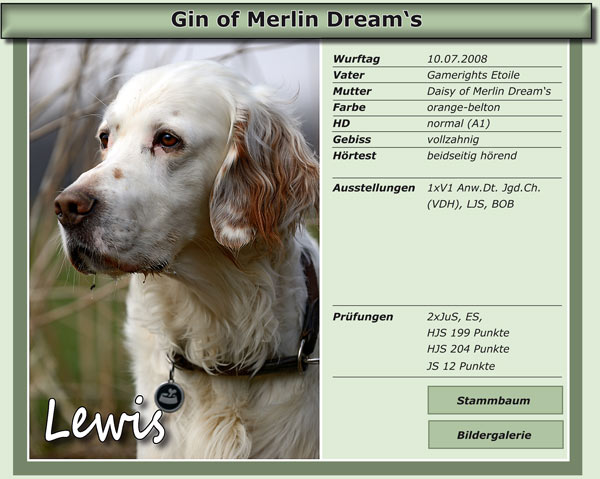 Gin of Merlin Dream's