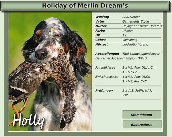 Holiday of Merlin Dream's