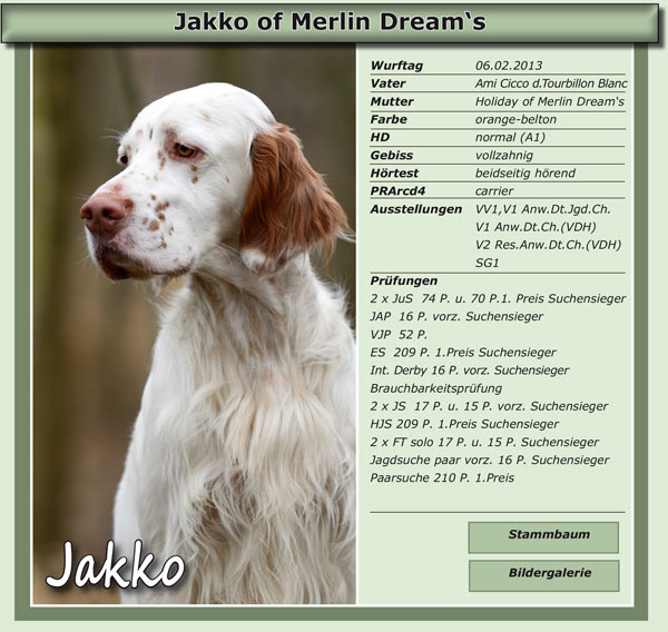 Jakko of Merlin Dream's